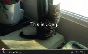 This is Joey