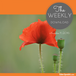 The Weekly Download - November 11, 2016, picture of a poppy in a field